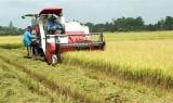 Vĩnh Hưng: Sau tết, nông dân khẩn trương thu hoạch lúa
