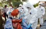 Bộ Y tế: Bệnh tả lợn châu Phi không gây bệnh trên người