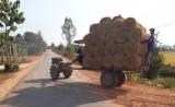 Mất an toàn giao thông vào mùa thu hoạch lúa