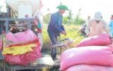 Tín hiệu vui cho lúa Nàng Thơm Chợ Đào