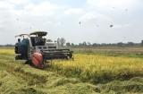 Bình Hòa Trung đẩy mạnh sản xuất lúa ứng dụng công nghệ cao