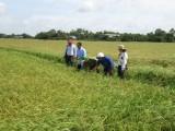 Long An được chuyển 115,4ha đất trồng lúa sang đất phi nông nghiệp
