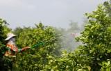 Phát triển cây ăn quả chủ lực