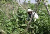 Tham gia hợp tác xã - Hướng đi của nông dân hiện đại