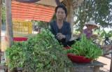 Bà cụ gần 70 tuổi với nghề trồng rau bợ nước