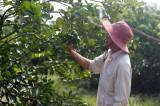 Hiệu quả từ chuyển đổi cây trồng, vật nuôi vùng Đồng Tháp Mười