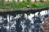 Những dòng kênh bị bức tử tại huyện Đức Hòa