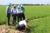 Sâu, bệnh ít gây hại đầu vụ lúa Hè Thu 2019