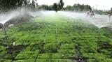 Kiến Tường: Tín hiệu vui từ sản xuất lúa ứng dụng công nghệ cao