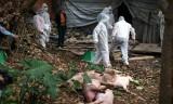 Thủ tướng gửi công điện về việc chống dịch tả lợn Châu Phi