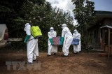 WHO: 25% số ca nhiễm Ebola không được phát hiện tại CHDC Congo