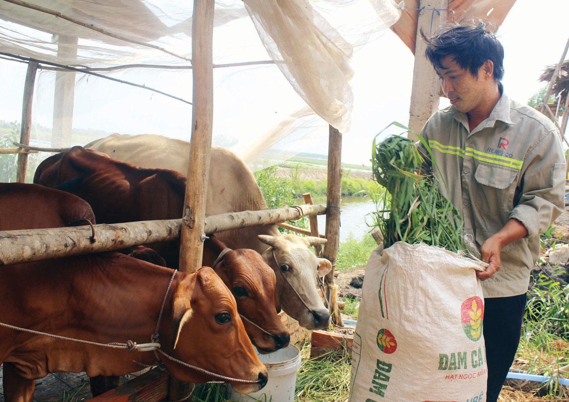 Anh Đặng Minh May được hỗ trợ bò giống phát triển kinh tế gia đình