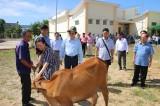 Nguyên Chủ tịch nước Trương Tấn Sang trao bò cho hộ nghèo tại huyện Vĩnh Hưng