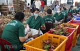 Tiền Giang mở rộng liên kết sản xuất trái cây đặc sản xuất khẩu