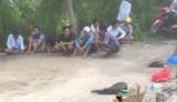 Tiền Giang: Xử lý 17 đối tượng đá gà ăn tiền