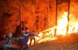 Thủ tướng: Tăng cường biện pháp cấp bách phòng cháy, chữa cháy rừng