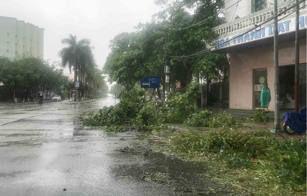 Cành cây gẫy đổ do bão số 2 tại khu I Đồ Sơn, Hải Phòng. (Ảnh: An Đăng/TTXVN)
