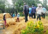 Tăng thu nhập từ phụ phẩm lúa