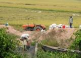 Vụ Hè Thu 2019: Nông dân lo lắng vì giá lúa giảm mạnh