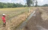 Hòa Khánh Tây: Có hay không việc ngang nhiên lấn chiếm đất canh tác?