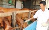 Cần Đước: Hiệu quả từ đề án nuôi bò thoát nghèo bền vững
