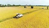 Liên kết sản xuất, tiêu thụ theo chuỗi giá trị trên quy mô cánh đồng lớn
