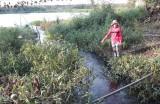 Xả nước thải chăn nuôi chưa qua xử lý, ảnh hưởng môi trường và sinh hoạt của người dân