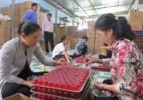 Bến Lức: Nguồn vốn chính sách góp phần tạo thu nhập ổn định cho lao động nông thôn