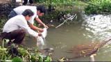 Cần Giuộc thả 500.000 con tôm về thiên nhiên
