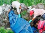 Cần Đước: Thêm 3 xã phát hiện dịch tả heo Châu Phi