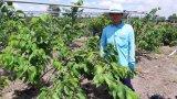 Thủ Thừa: Đổi thay trong chuyển dịch cơ cấu cây trồng tại xã Tân Thành