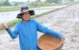 Khuyến cáo nông dân không nên sản xuất lúa vụ 3
