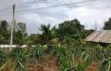 Cty Điện lực Long An thông tin về tai nạn điện tại xã Mỹ An, huyện Thủ Thừa