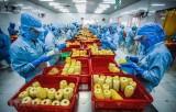 Giá trị xuất khẩu rau quả của Việt Nam tám tháng qua giảm gần 6%