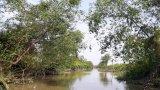 Tăng cường phối hợp trong quản lý rừng phòng hộ