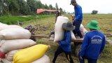Vĩnh Hưng: Năm 2019, sản lượng lúa đạt gần 345.000 tấn