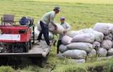 """Nông dân thu hoạch lúa, """"mở đồng"""" đón lũ"""