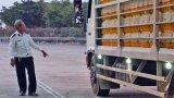 Long An thiêu hủy gần 47.000 con heo bị dịch tả heo châu Phi