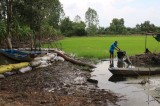 Tân Thạnh: Gần 250ha lúa bị lũ đe dọa
