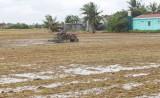 Vụ Đông Xuân 2019-2020: Nông dân cần gieo sạ đúng lịch thời vụ