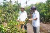 Bến Lức: Hơn 100 gốc chanh chết nghi do ảnh hưởng từ hóa chất đổ trộm ra môi trường