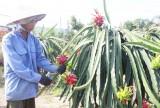 An Nhựt Tân: Nâng chất các tiêu chí nông thôn mới