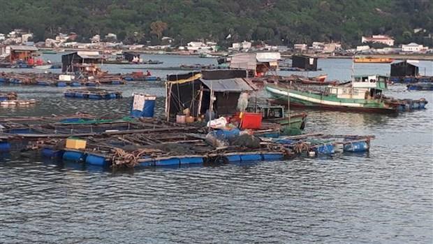 Cá lồng bè bị chết hàng loạt tại khu vực nuôi ở Hòn Tre. (Ảnh: Lê Sen/TTXVN)