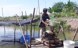 Để vùng Đồng Tháp Mười phát triển thủy sản ổn định, bền vững