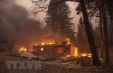 Mỹ: Bang California ban bố tình trạng khẩn cấp vì cháy rừng