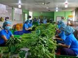 Rau màu tăng giá - nông dân phấn khởi