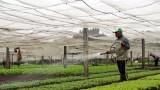 Sản phẩm nông nghiệp hữu cơ: Chuẩn hóa tạo tính hấp dẫn