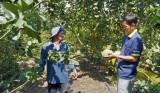 Vĩnh Hưng: Chuyển đổi cơ cấu cây trồng mang lại hiệu quả cao