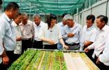 Chi cục Phát triển nông thôn Kiên Giang khảo sát hợp tác xã tại Cần Đước