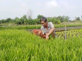 Nông dân sản xuất giỏi